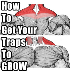 get-your-traps-to-grow