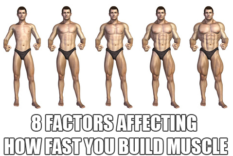 How Much & How Fast Can You Can Build Muscle